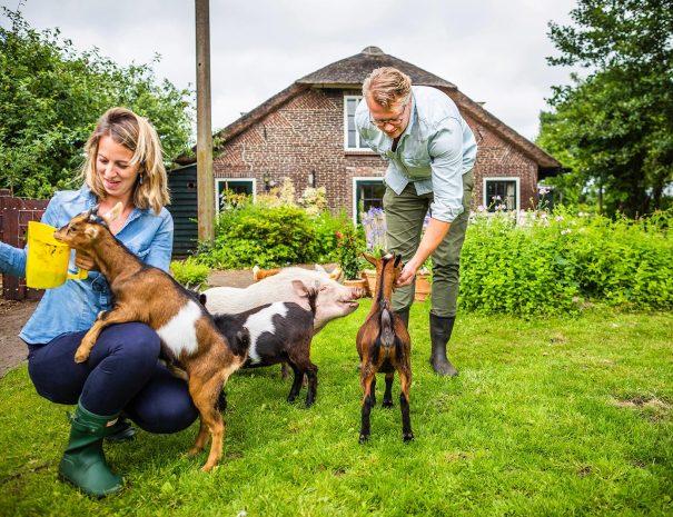Lucas en Marlous voeren de geiten Linda Roos en Jessica en de varkens