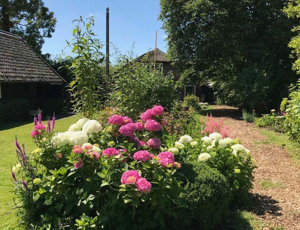 Uitzicht tuin op hortensia's bijThe Dutch Farmhouse Bed en breakfast