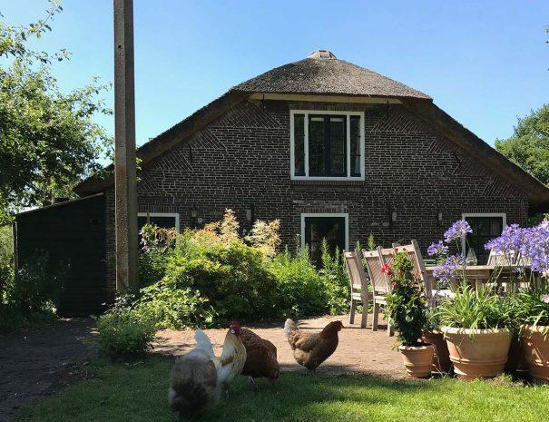 Uitzicht op de achterkant van de boerderij met kippen